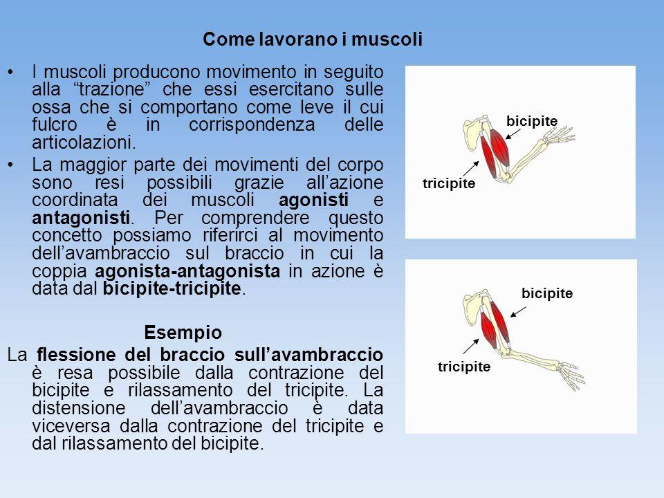 Come lavorano i muscoli