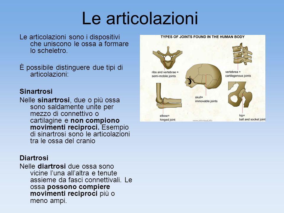 Le articolazioni Le articolazioni sono i dispositivi che uniscono le ossa a formare lo scheletro. È possibile distinguere due tipi di articolazioni: