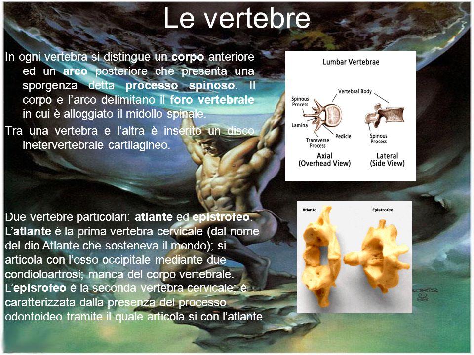 Le vertebre