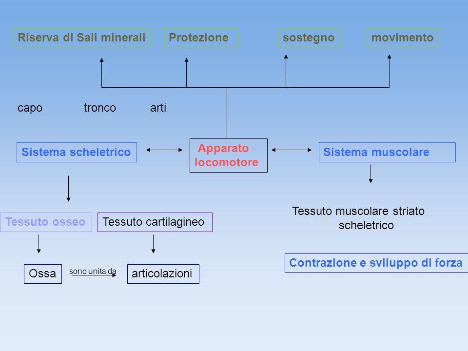 Riserva di Sali minerali Protezione sostegno movimento