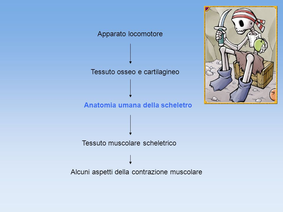 Apparato locomotore Tessuto osseo e cartilagineo. Anatomia umana della scheletro. Tessuto muscolare scheletrico.