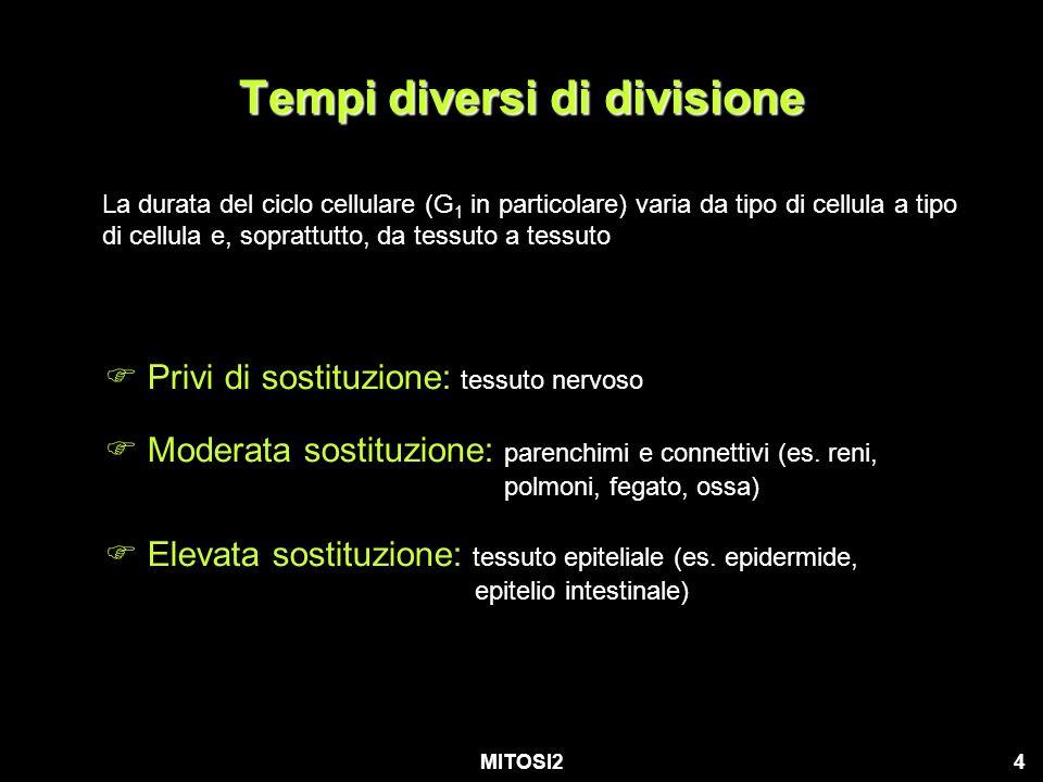 Tempi diversi di divisione