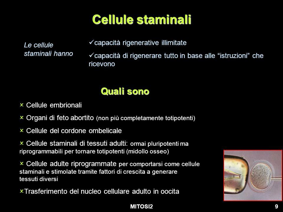 Cellule staminali Quali sono capacità rigenerative illimitate