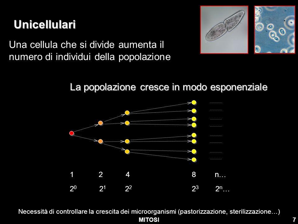 Unicellulari Una cellula che si divide aumenta il numero di individui della popolazione. La popolazione cresce in modo esponenziale.