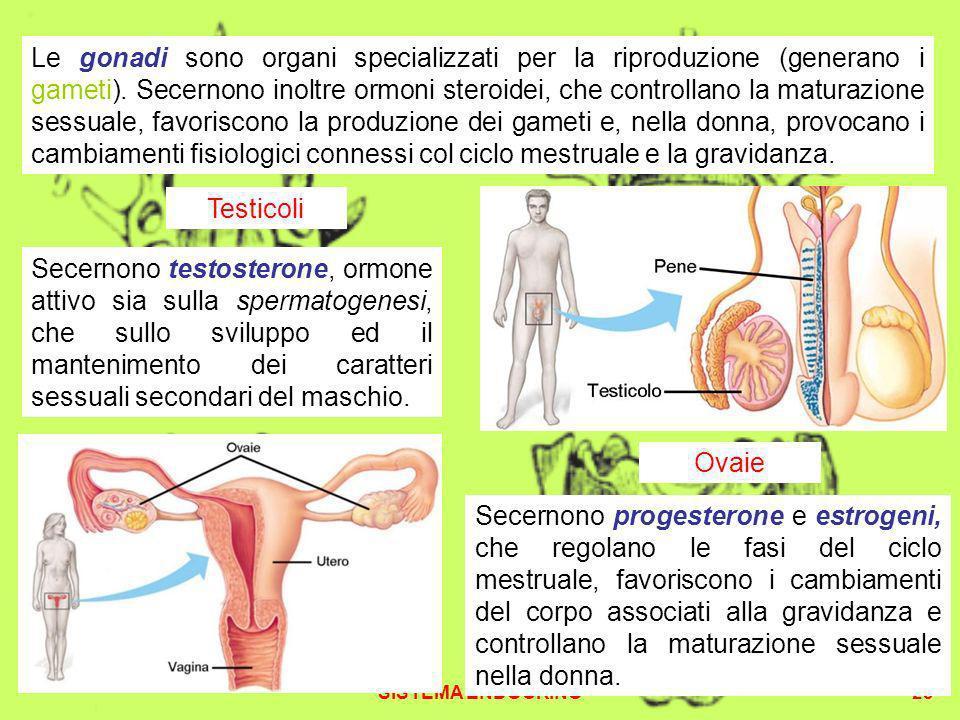 Le gonadi sono organi specializzati per la riproduzione (generano i gameti). Secernono inoltre ormoni steroidei, che controllano la maturazione sessuale, favoriscono la produzione dei gameti e, nella donna, provocano i cambiamenti fisiologici connessi col ciclo mestruale e la gravidanza.