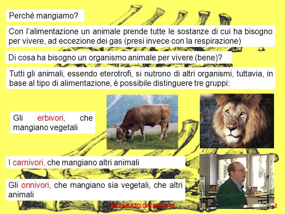 Di cosa ha bisogno un organismo animale per vivere (bene)