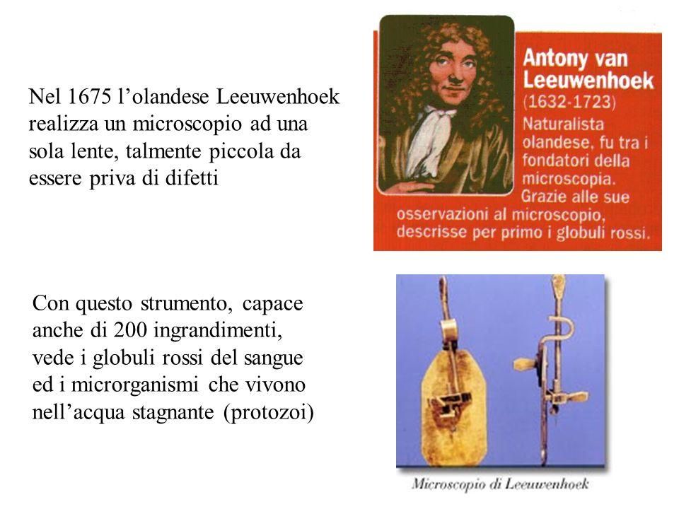 Nel 1675 l'olandese Leeuwenhoek realizza un microscopio ad una sola lente, talmente piccola da essere priva di difetti