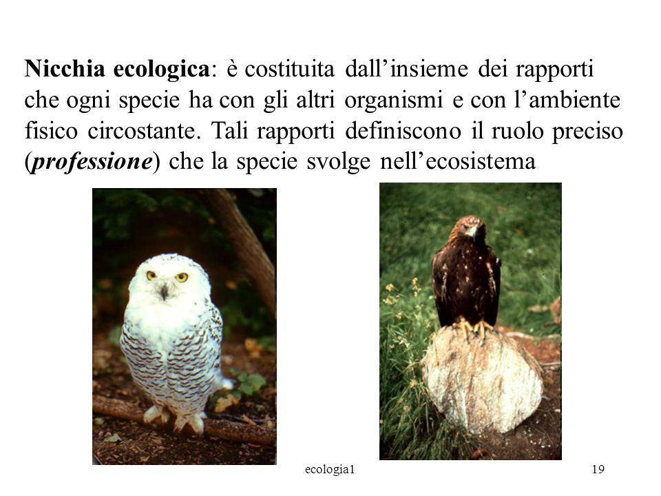 Nicchia ecologica: è costituita dall'insieme dei rapporti che ogni specie ha con gli altri organismi e con l'ambiente fisico circostante. Tali rapporti definiscono il ruolo preciso (professione) che la specie svolge nell'ecosistema