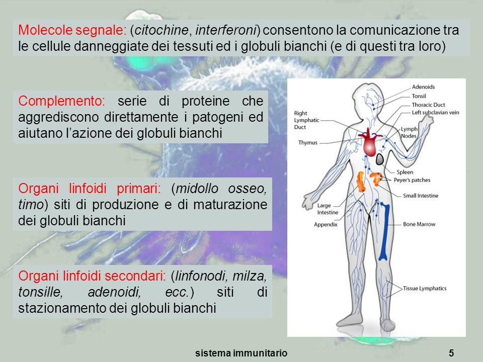 Molecole segnale: (citochine, interferoni) consentono la comunicazione tra le cellule danneggiate dei tessuti ed i globuli bianchi (e di questi tra loro)