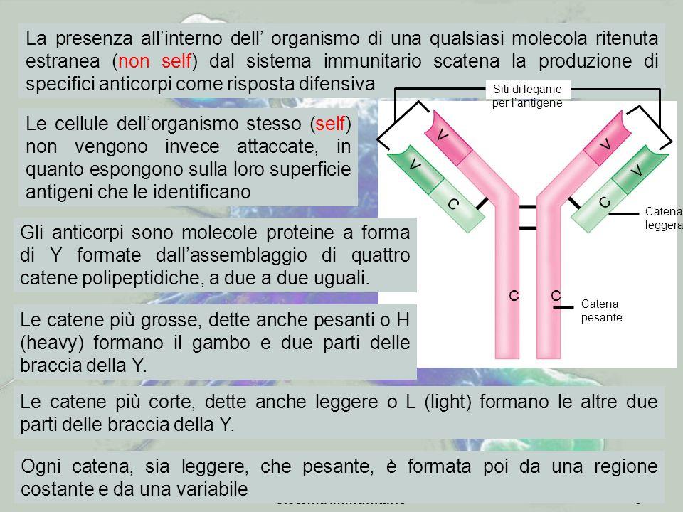 Siti di legame per l'antigene