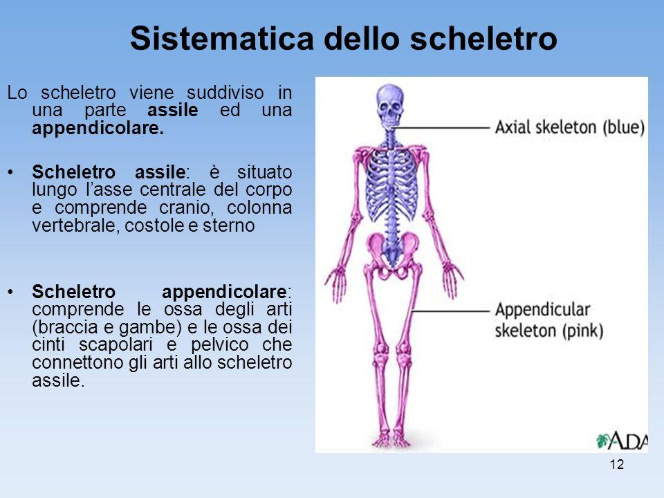 Sistematica dello scheletro