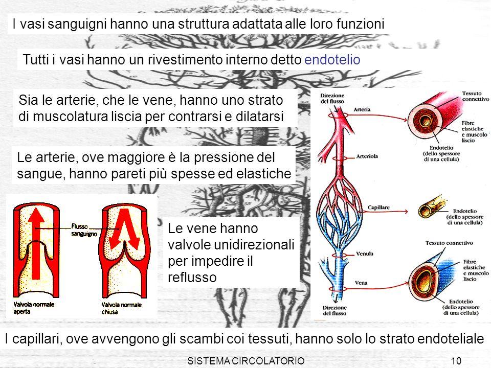 I vasi sanguigni hanno una struttura adattata alle loro funzioni