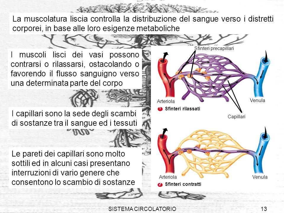 La muscolatura liscia controlla la distribuzione del sangue verso i distretti corporei, in base alle loro esigenze metaboliche
