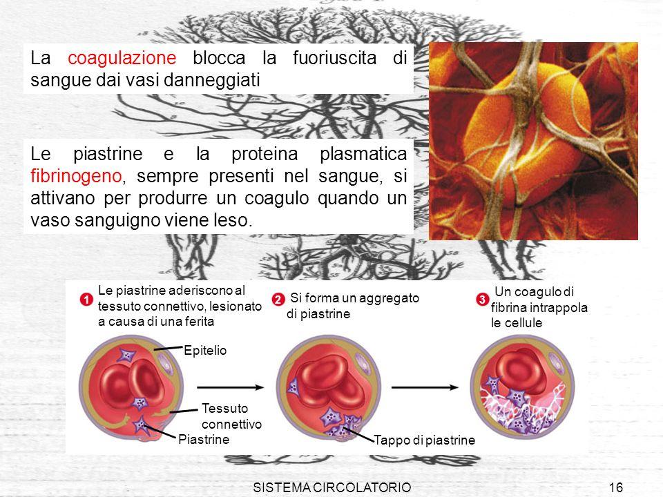La coagulazione blocca la fuoriuscita di sangue dai vasi danneggiati