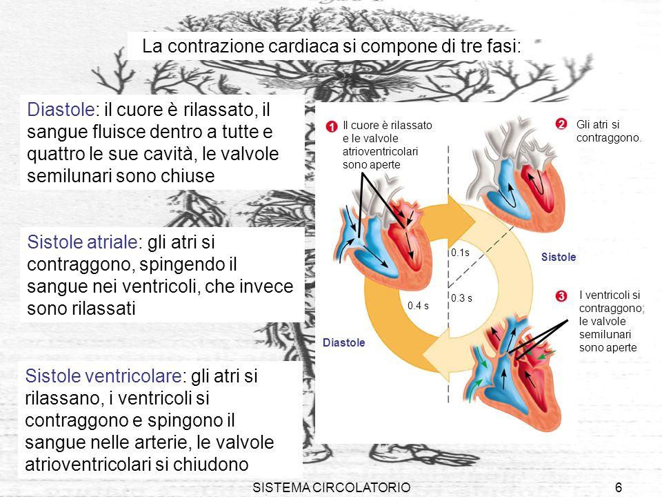 La contrazione cardiaca si compone di tre fasi: