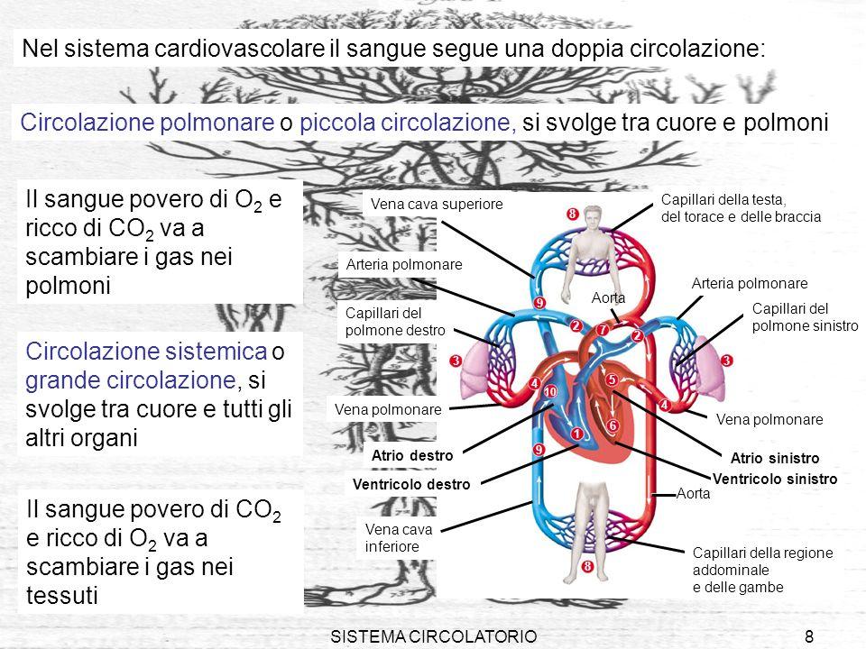 Nel sistema cardiovascolare il sangue segue una doppia circolazione: