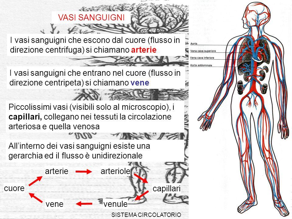 VASI SANGUIGNI I vasi sanguigni che escono dal cuore (flusso in direzione centrifuga) si chiamano arterie.