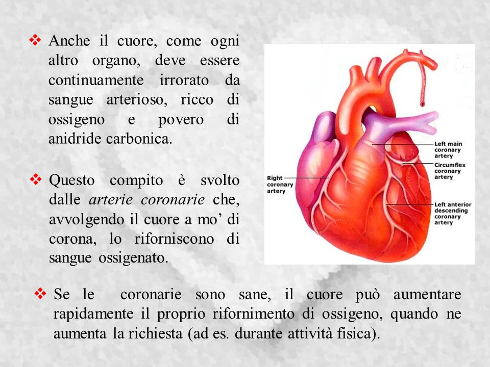 Anche il cuore, come ogni altro organo, deve essere continuamente irrorato da sangue arterioso, ricco di ossigeno e povero di anidride carbonica.