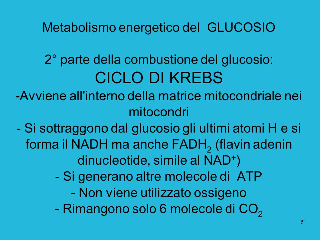 CICLO DI KREBS Metabolismo energetico del GLUCOSIO