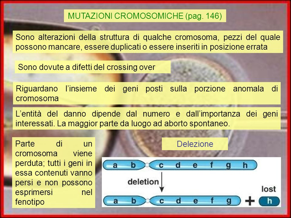MUTAZIONI CROMOSOMICHE (pag. 146)