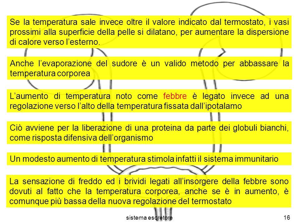 Se la temperatura sale invece oltre il valore indicato dal termostato, i vasi prossimi alla superficie della pelle si dilatano, per aumentare la dispersione di calore verso l'esterno.