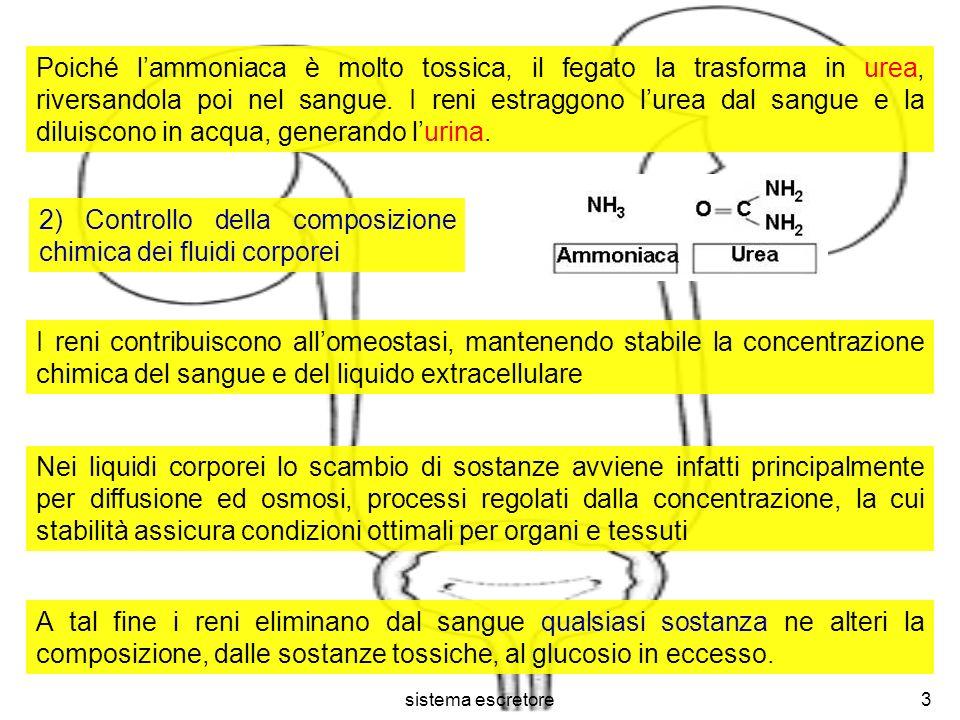 2) Controllo della composizione chimica dei fluidi corporei