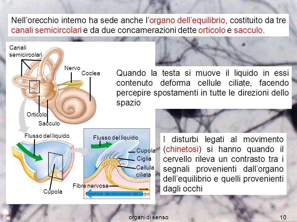 Nell'orecchio interno ha sede anche l'organo dell'equilibrio, costituito da tre canali semicircolari e da due concamerazioni dette orticolo e sacculo.