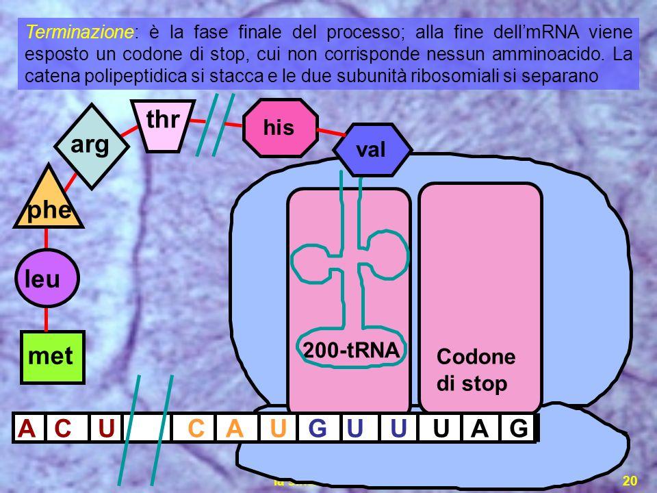thr arg phe leu met A C U C A U G U U U A G his val 200-tRNA Codone