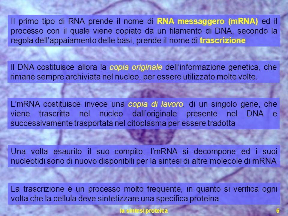 Il primo tipo di RNA prende il nome di RNA messaggero (mRNA) ed il processo con il quale viene copiato da un filamento di DNA, secondo la regola dell'appaiamento delle basi, prende il nome di trascrizione