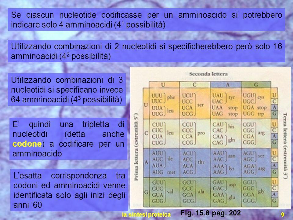 Se ciascun nucleotide codificasse per un amminoacido si potrebbero indicare solo 4 amminoacidi (41 possibilità)