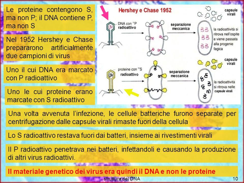 Le proteine contengono S, ma non P; il DNA contiene P, ma non S