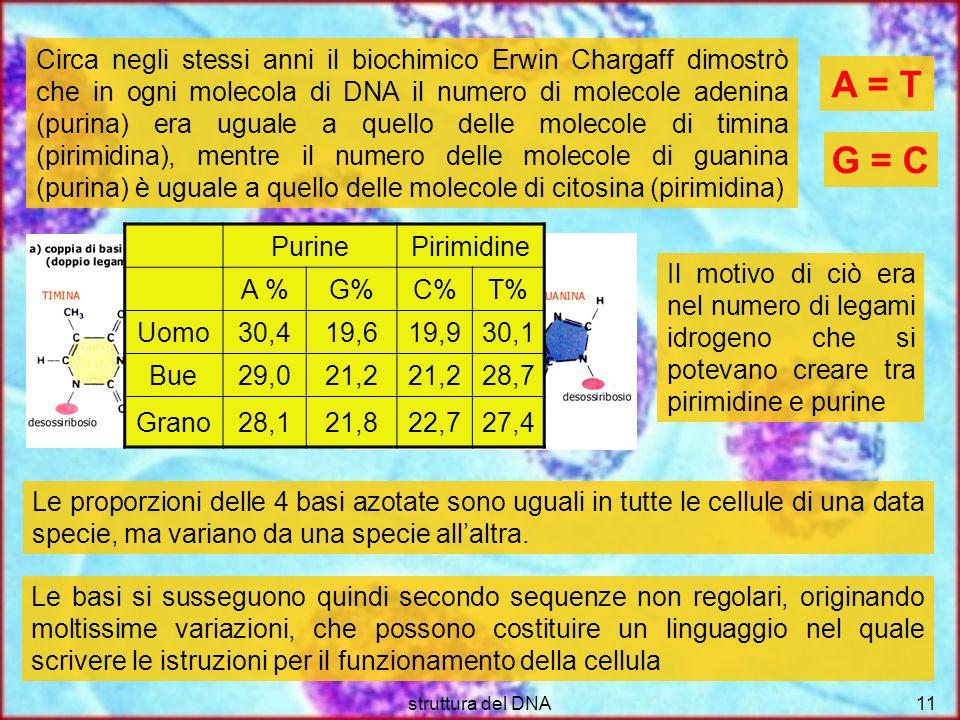 Circa negli stessi anni il biochimico Erwin Chargaff dimostrò che in ogni molecola di DNA il numero di molecole adenina (purina) era uguale a quello delle molecole di timina (pirimidina), mentre il numero delle molecole di guanina (purina) è uguale a quello delle molecole di citosina (pirimidina)