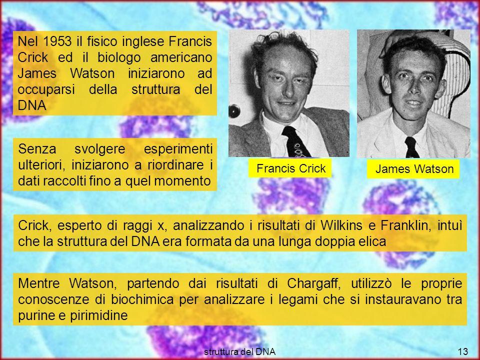 Nel 1953 il fisico inglese Francis Crick ed il biologo americano James Watson iniziarono ad occuparsi della struttura del DNA