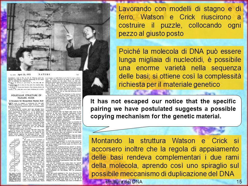 Lavorando con modelli di stagno e di ferro, Watson e Crick riuscirono a costruire il puzzle, collocando ogni pezzo al giusto posto