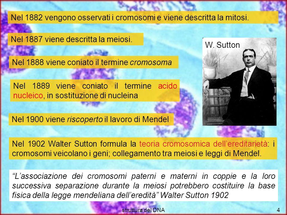 Nel 1882 vengono osservati i cromosomi e viene descritta la mitosi.