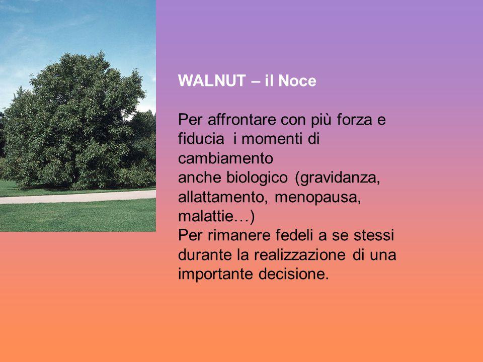 WALNUT – il Noce Per affrontare con più forza e. fiducia i momenti di cambiamento.