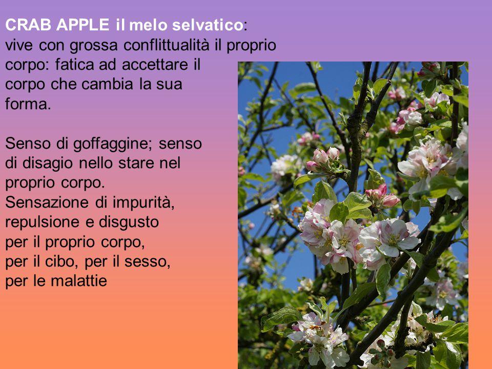 CRAB APPLE il melo selvatico: