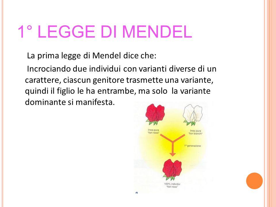 1° legge di Mendel
