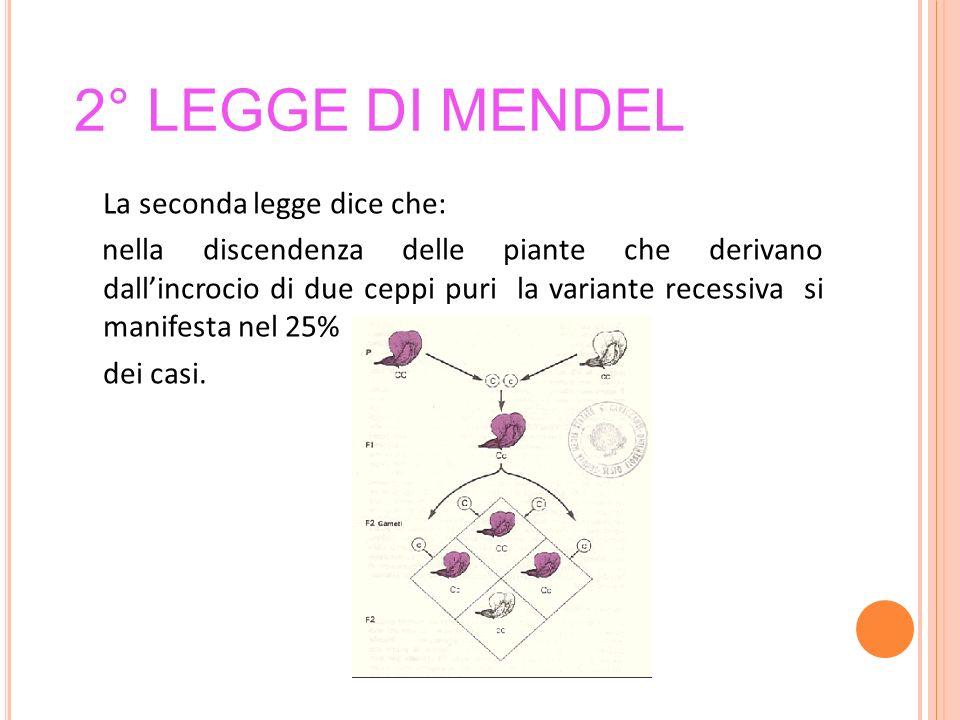 2° legge di Mendel