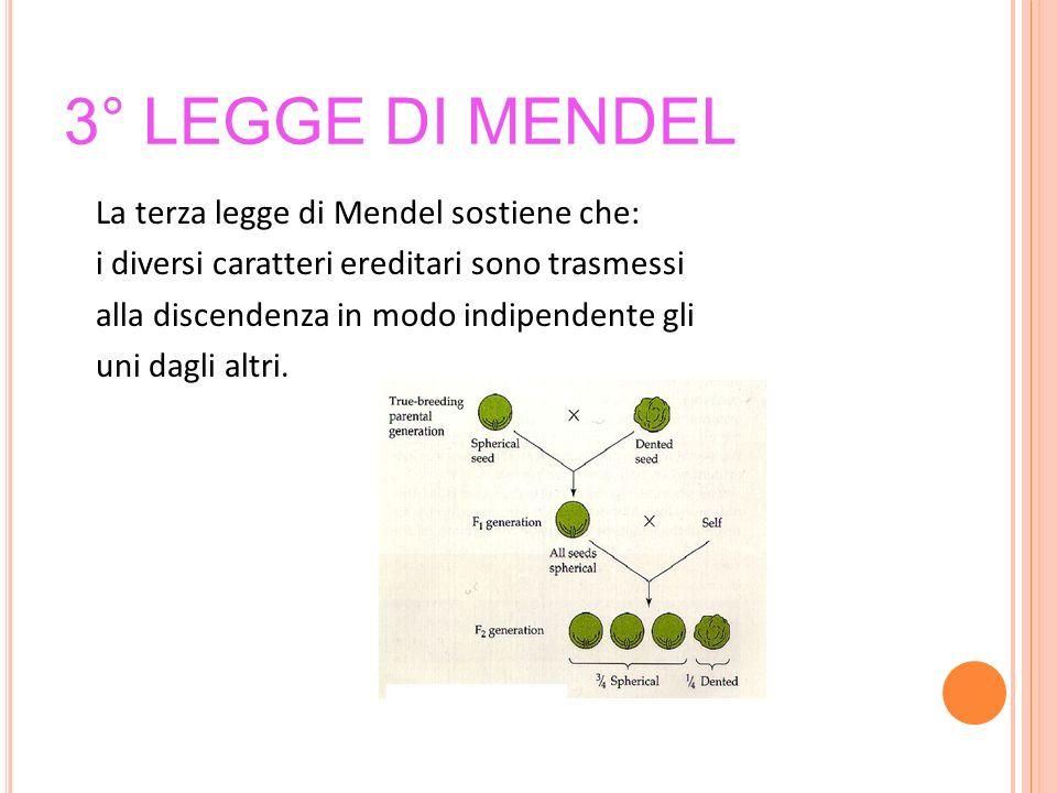 3° legge di Mendel