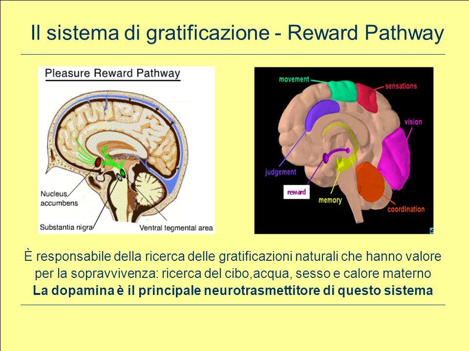 La dopamina è il principale neurotrasmettitore di questo sistema