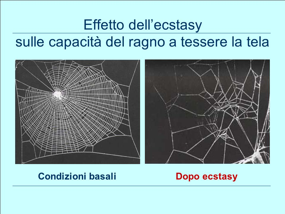 Effetto dell'ecstasy sulle capacità del ragno a tessere la tela