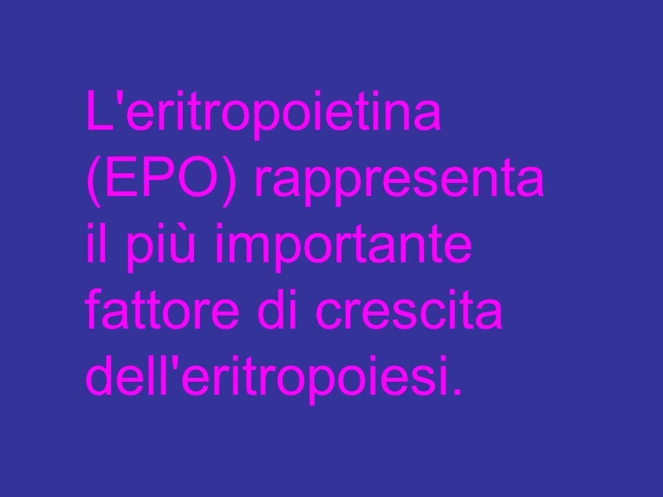 L eritropoietina (EPO) rappresenta il più importante fattore di crescita dell eritropoiesi.