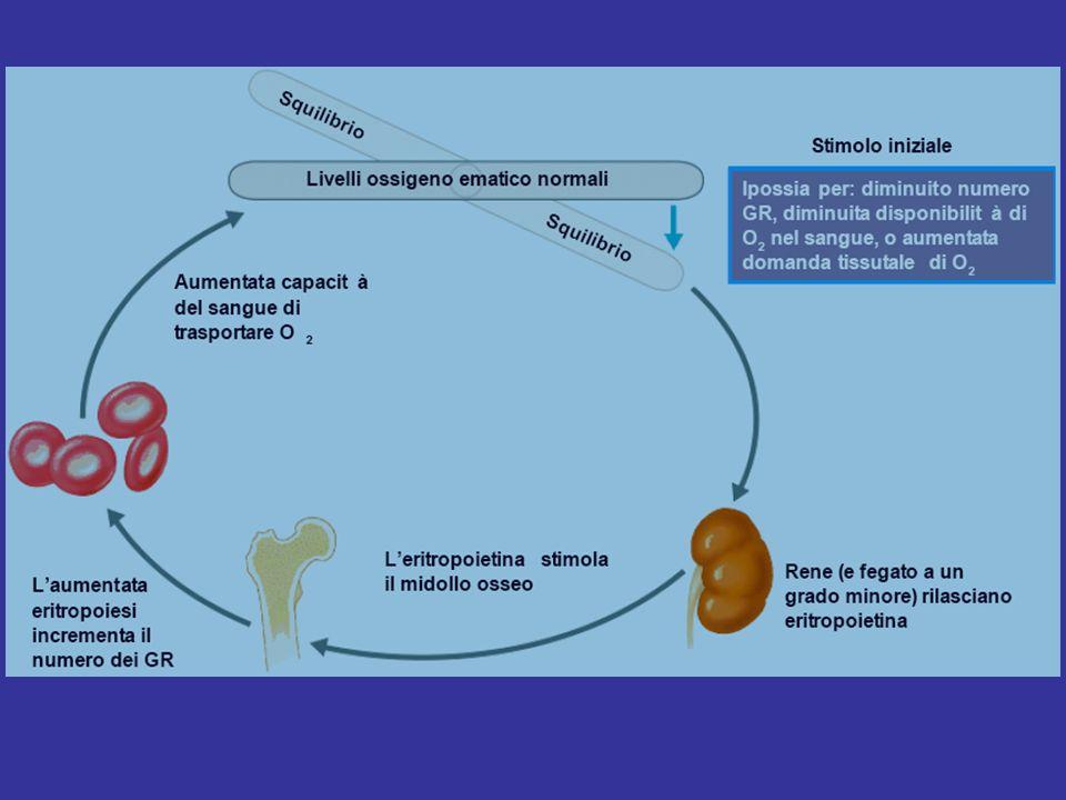 L eritropoietina, pur non essendo l unico fattore di crescita responsabile dell eritropoiesi, rappresenta il più importante regolatore della proliferazione dei progenitori eritroidi.
