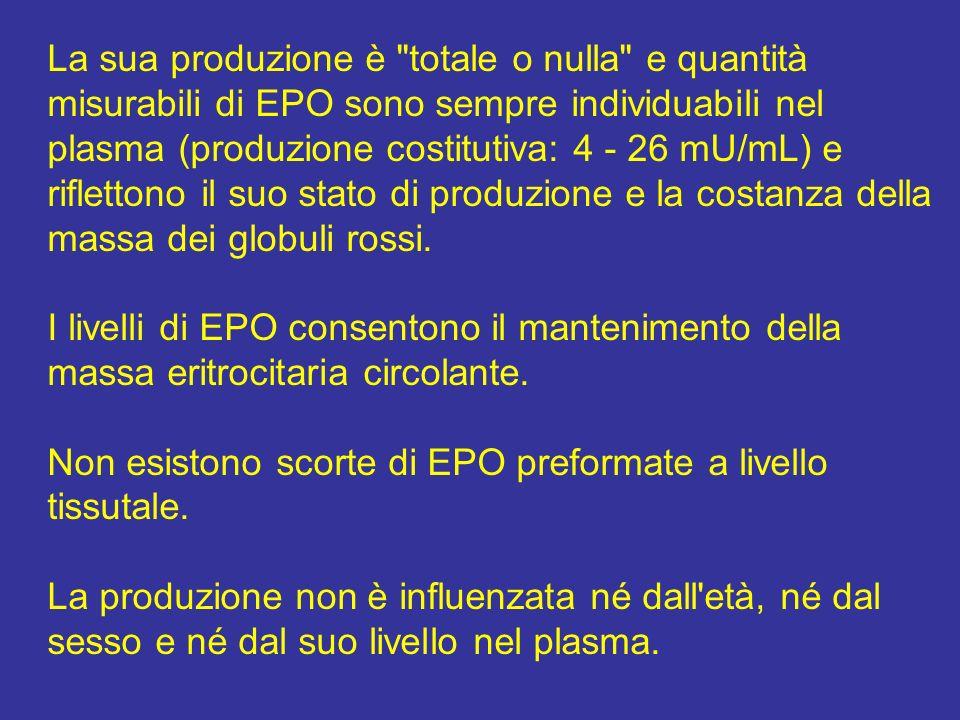 La sua produzione è totale o nulla e quantità misurabili di EPO sono sempre individuabili nel plasma (produzione costitutiva: 4 - 26 mU/mL) e riflettono il suo stato di produzione e la costanza della massa dei globuli rossi.