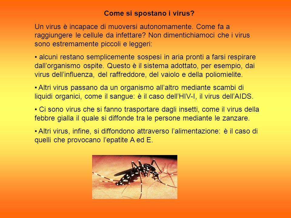 Come si spostano i virus