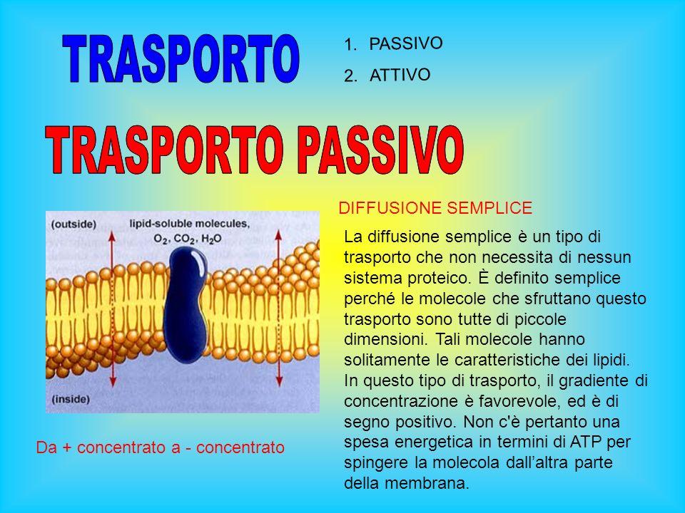 TRASPORTO TRASPORTO PASSIVO TRASPORTO PASSIVO PASSIVO ATTIVO