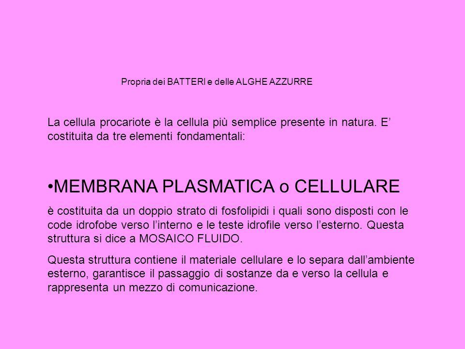 MEMBRANA PLASMATICA o CELLULARE