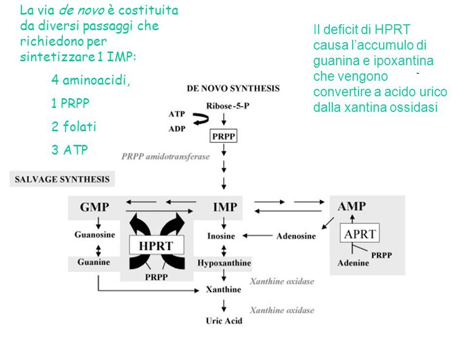La via de novo è costituita da diversi passaggi che richiedono per sintetizzare 1 IMP: