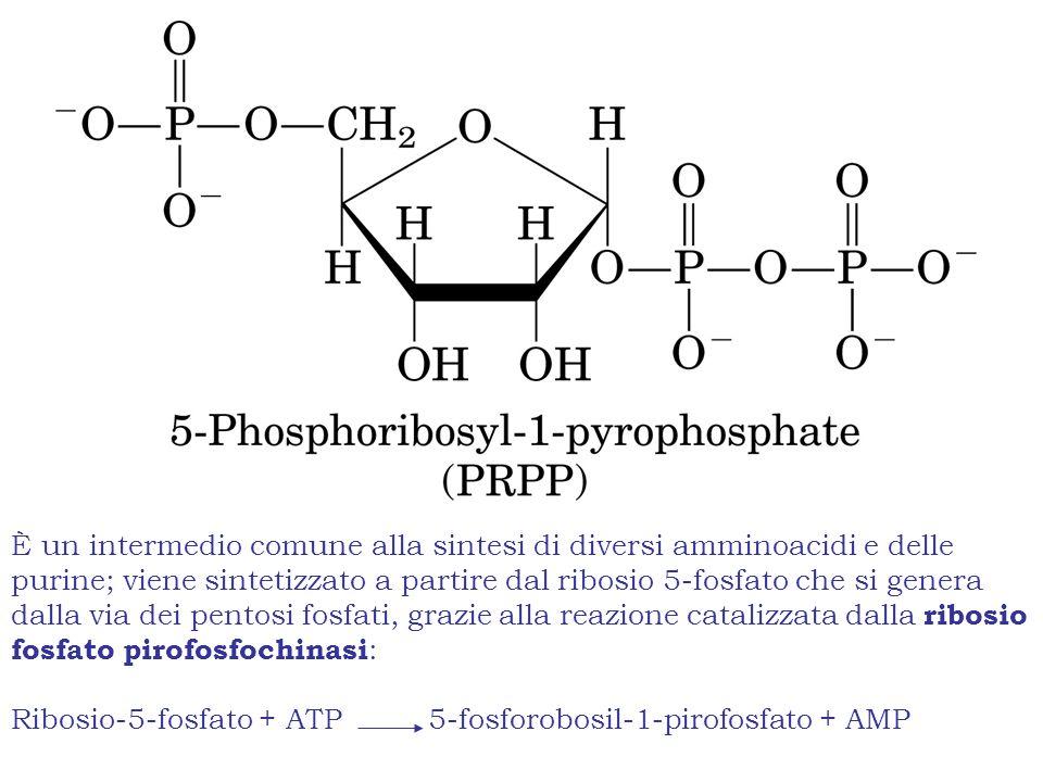 È un intermedio comune alla sintesi di diversi amminoacidi e delle purine; viene sintetizzato a partire dal ribosio 5-fosfato che si genera dalla via dei pentosi fosfati, grazie alla reazione catalizzata dalla ribosio fosfato pirofosfochinasi: